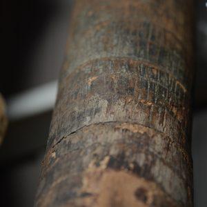 檳榔樹(ビンロウジユ)