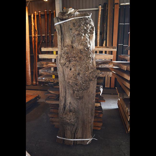 神代木の瘤